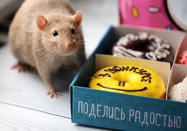 http://saule-spb.ru/vision/web/postcards/lh-p-02.jpg