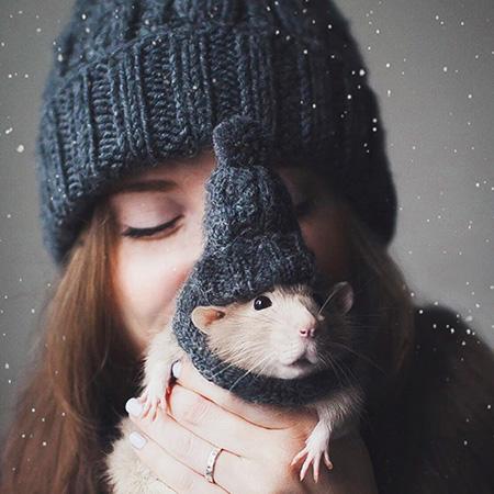 http://saule-spb.ru/vision/web/postcards/rats/avatar-2017.jpg